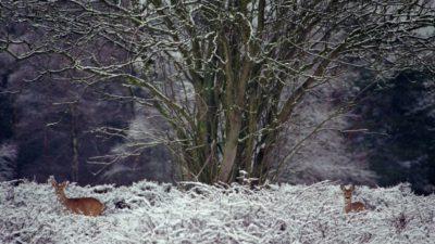 (audio) Oproep GNR bij sneeuw: blijf zoveel mogelijk op de wandelpaden