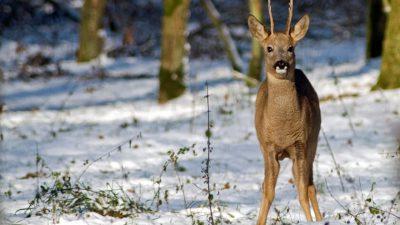 GNR: 'Voor al onze dieren is het nu heel belangrijk om zich veilig te voelen'