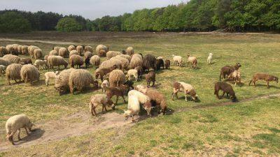 Na deal met Amsterdam over GNR richten Gooise gemeenten pijlen op de provincie