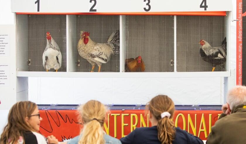 GPKV organiseert Kleindierenshow in De Wel: Samen maken we er een geweldige show van!'