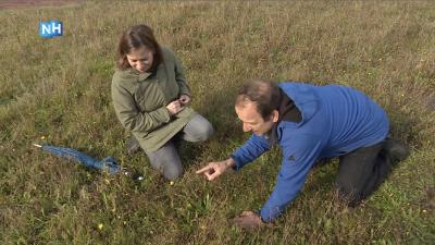 Natuurlijk Noord-Holland: natuur tussen de camera's en sterren op het Mediapark