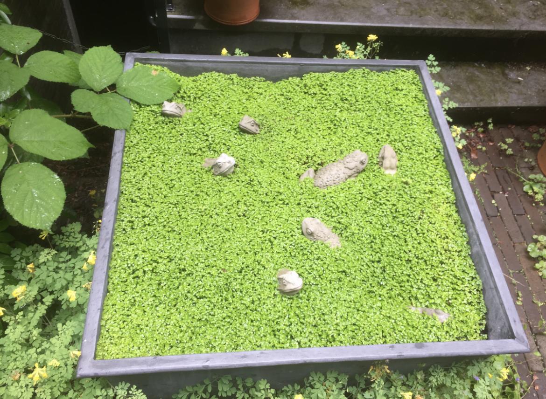 Plant en zaai in het najaar